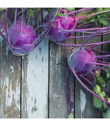 Kaleráb raný modrý Purple vienna - rastlina Brassica oleracea - predaj semien kalerábov - 50 ks